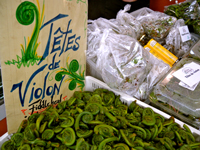 It�s Fiddlehead Season
